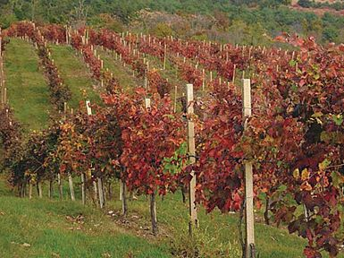 Pomembne priložnosti za vinogradnike