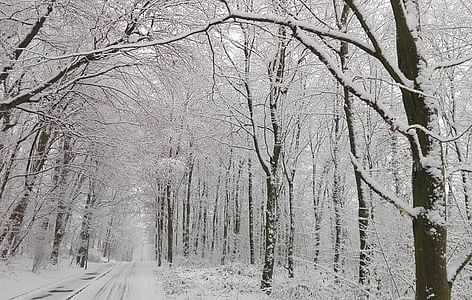 Mraz bo pritisnil in burja bo razsajala!