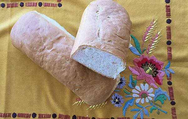 Stare jedi v novih loncih (4)