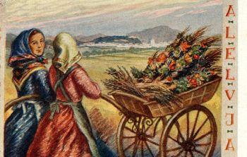 Danes je oljčna, cvetna nedelja